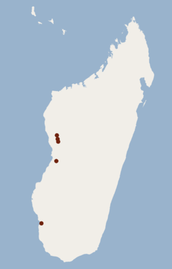 Distribution of Scotophilus tandrefana.png