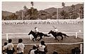 Dli-Corrida de cavalos.jpg