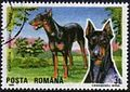 Dobermann-Pinscher-Canis-lupus-familiaris Romania 1990.jpg