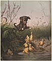 Dog Frightening Ducklings by Boston Public Library.jpg