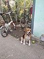 Dog and bike.jpg