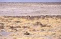 Dunst Etosha Oct 2002 slide375.jpg