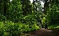 Durch den kühlen Wald - panoramio.jpg