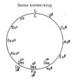 Durov kvintni krog.png