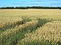 East Lothian Arable Land - geograph.org.uk - 1431521.jpg