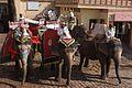 Elephant Drivers - Amber Fort - Jaipur (4609934767).jpg