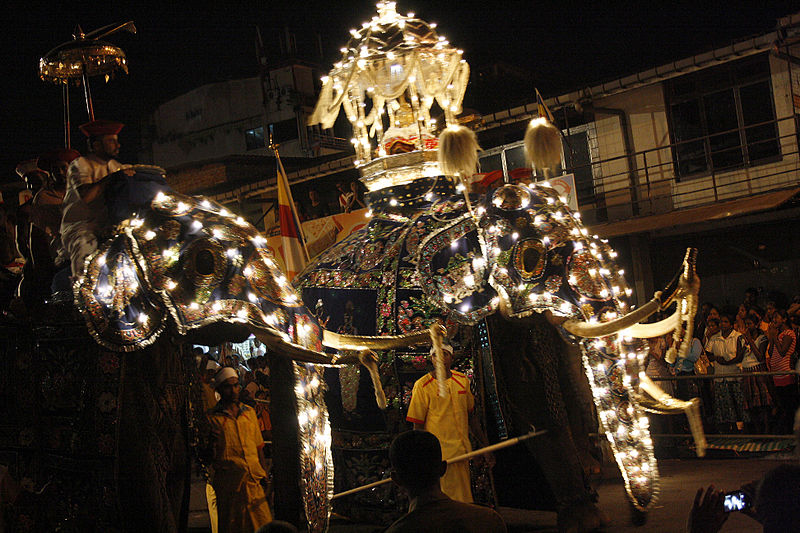 File:Elephants of Kandy Esala Perahera.jpg