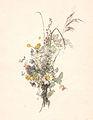 Elias Sehlstedt blomsterbukett Ill av Carl Larsson.jpg