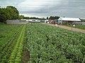 Elmwood Nurseries - geograph.org.uk - 173486.jpg