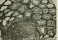 Endocrinology (1917) (14784017485).jpg