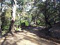 Engadine NSW 2233, Australia - panoramio (162).jpg