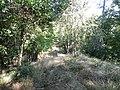 Entre les deux versants de la colline - panoramio.jpg