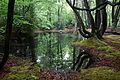 Epping Forest High Beach Essex England - spring pond 10.jpg