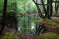 Epping Forest High Beach Essex England - spring pond 10.jpg