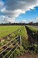 Eppleworth Rd, Cottingham IMG 9503 - panoramio.jpg
