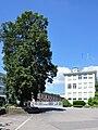 Ermenswil (Eschenbach) - Baumann Federn 2010-06-25 16-08-40 ShiftN.jpg