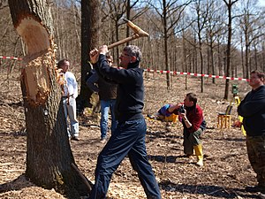 Experimental archaeology - Image: Exp Arch Tree Felling