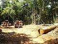 Extração em floresta.jpg