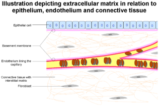 Extracellular matrix structure external to cells, which provides structural support for cells or tissues