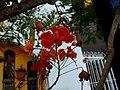 FLOR, RINCON DE GUAYABITOS - panoramio (12).jpg