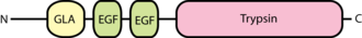Factor IX - Image: Factor IX