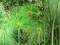 Fale - Giardini Botanici Hanbury in Ventimiglia - 398.jpg