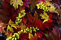 Fall-foliage-leaves - Virginia - ForestWander.jpg