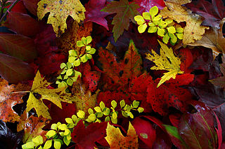 Fall-foliage-leaves - Virginia - ForestWander.jpg
