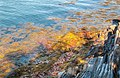 Fall Color (22975943295).jpg