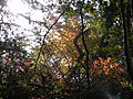 Fall at FLSP (5249373542).jpg