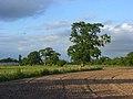 Farmland, Wasing - geograph.org.uk - 1775987.jpg