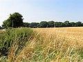 Farmland near Stanmore - geograph.org.uk - 39308.jpg