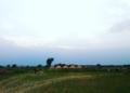 Fields Pakistan.png