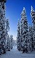 Finland 2012-01-28 (6833848456).jpg