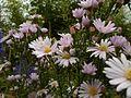 Fleur-blanche-pistil-jaune VAN DEN HENDE ALAIN CC -BY-SA 4 0 04491 bg pdp -14490603873Xn.jpg