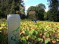Flickr - brewbooks - A Poet's GARDEN Miriel Lenore (Lotus Pool).jpg