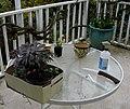 Flickr - brewbooks - New Plants for the Garden.jpg