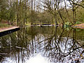 Flickr - ronsaunders47 - RISLEY REFLECTIONS.POND LIFE 1.jpg