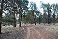 Flinders Ranges SA 5434, Australia - panoramio (97).jpg
