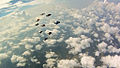 Flock Flying over Clouds (6367740261).jpg
