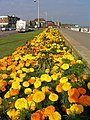 Floral display, Bexhill Promenade, Sussex - geograph.org.uk - 37400.jpg