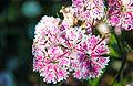 Flower-109.jpg
