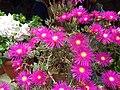Flower 5 HDR.jpg