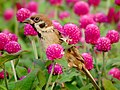 Flower Lover (4863989471).jpg