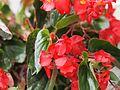 Flower at paddock (4673046027).jpg