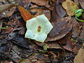 Flower on the ground (15497372667).jpg