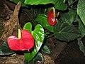 Flowers, The Living Rainforest.jpg