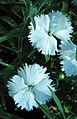 Flowers (43).JPG