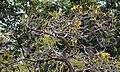 Flowers (6827999786).jpg