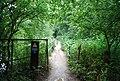 Footbridge on the Wealdway - geograph.org.uk - 1391381.jpg